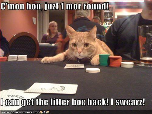 i46.photobucket.com_albums_f122_13emma13_funny_pictures_cat_gambler_about_to.jpg